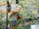 Butterfly Garden - Tink and a Monarch butterfly