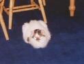 D.J. - September 1996