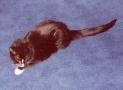 Froofer - September 1996