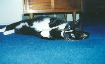 Froofer In His Standard Greeting Pose - Rolling Over - October 2000