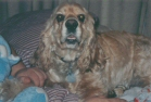 Murphy - February 1995