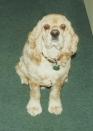 Murphy - December 1994