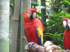 The parrots were really this close to us - 3 feet away