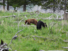 Two Black Bears From 15 Yards (As We Were Leaving The Park)